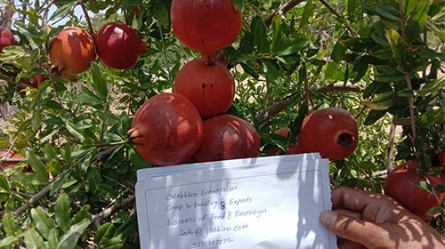 Read more about the article Pomegranate Export